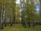 Золотая осень в санатории Остреч